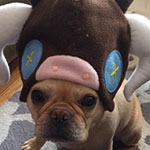 Thumbnail image for stuffed stuff: Plush Pyth baby hat