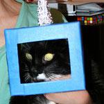 Thumbnail image for Robot Kitty